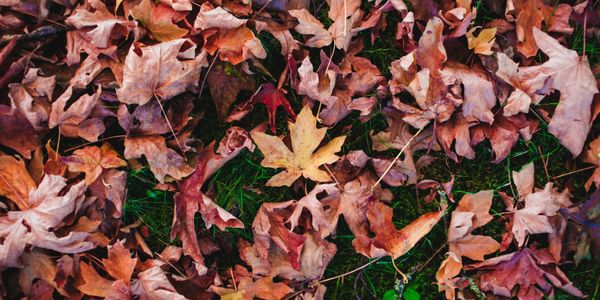 How to prepare your lawn for autumn